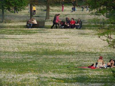 I grandi prati del Parco Urbano. Foto Forlipedia.